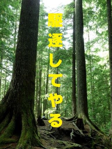 Kuchiku2